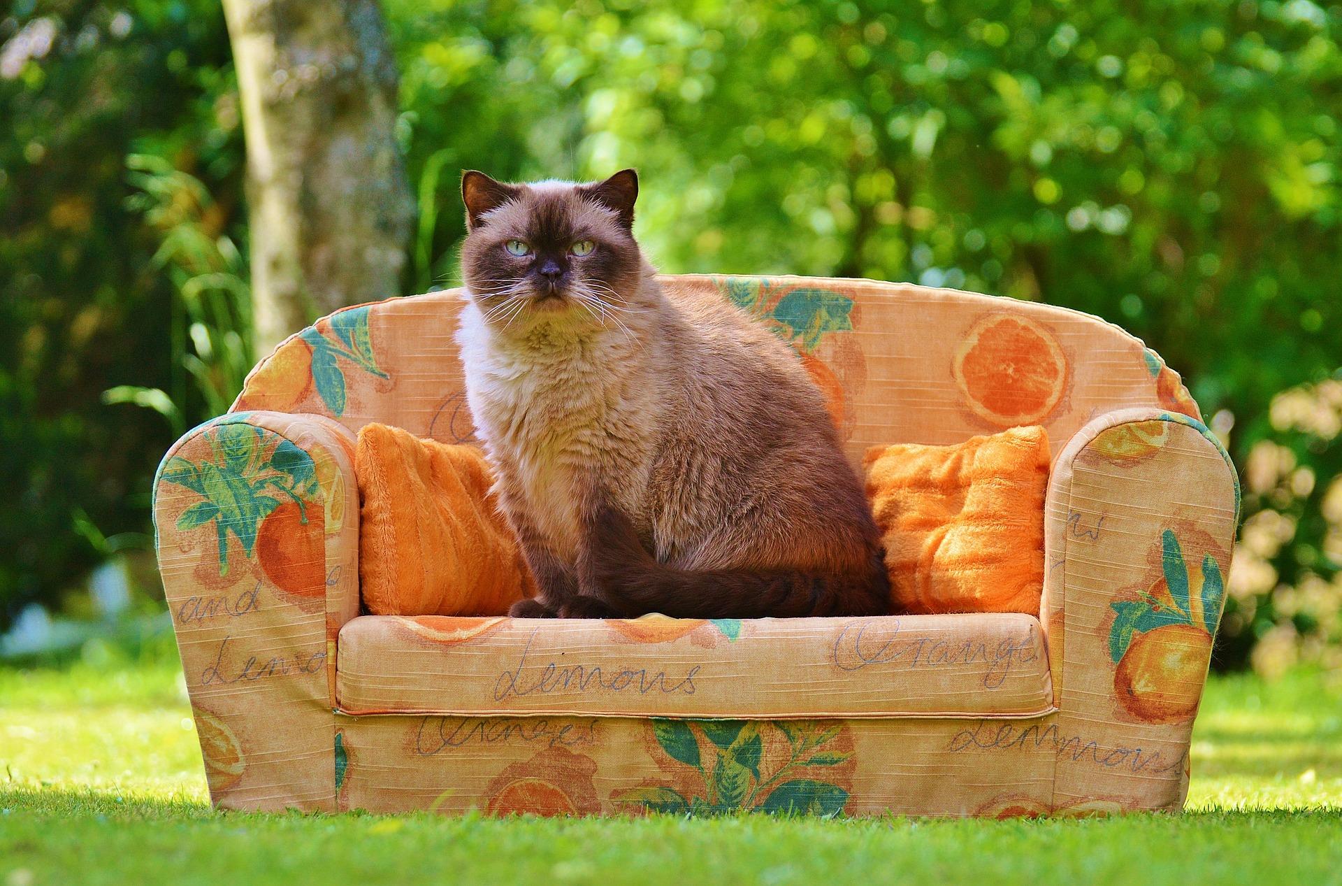 Tierpsychologie - Verhaltenstherapie